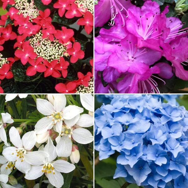 5 X Mixed Garden Plants - High Quality Established Plants in Pots. Hardy Mix of UK Grown Shrubs, Grasses, Herbaceous, Climbers, etc.